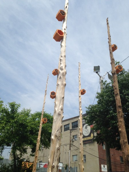 Pollinator Poles Project supported by the Somerville Arts Council and Mass Cultural Council